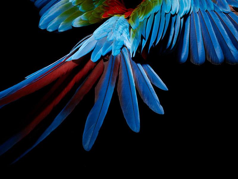 Ss_bird_6