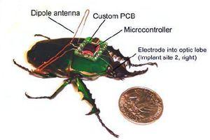 BeetleBorg1