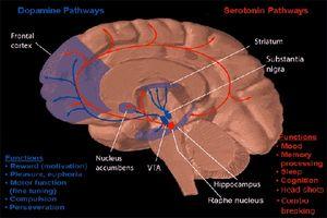 Brain-20100121-600