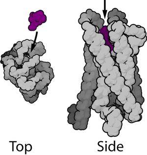 567px-Mu-opioid_receptor_(GPCR)