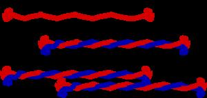300px-Intermediate_filament.svg