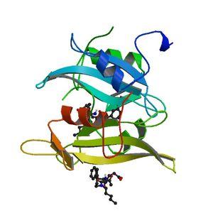 PBB_Protein_SRC_image