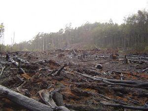 Deforestation-e1339142364289