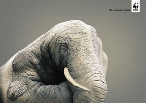 Guido-Daniele-Animals-Hand-Painting-5-537x380