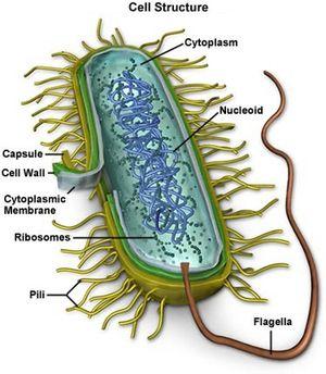 Mycoplasma-1343117597