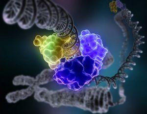HardisonRepairingDNA-NIH-640x498