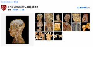 Bessettcollection