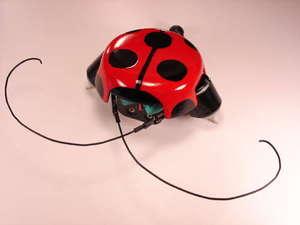 Beetlebot070808_1
